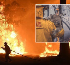 Mateship Is Alive During The Australian Bushfires